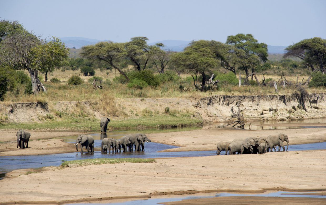 Explore Tanzania - Accommodatie Selous Game Reserve - Sand Rivers Selous
