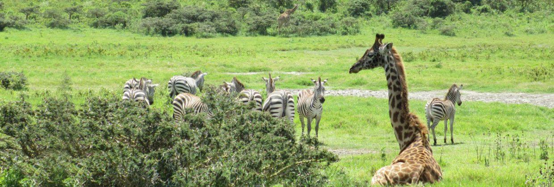 Arusha Nationaal Park