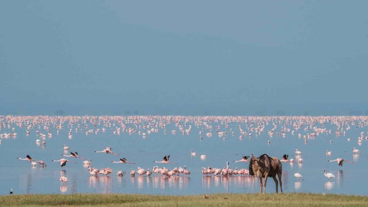Blog werkreis Marloes: afwisselend Lake Manyara
