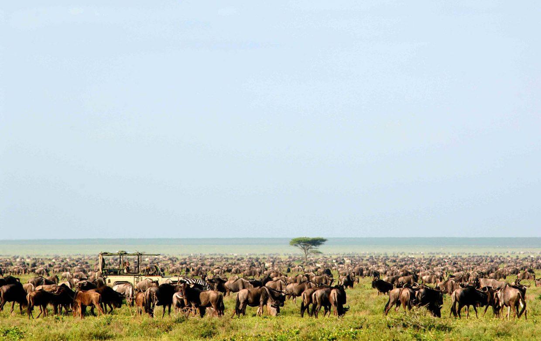 Safari totaalbeleving, all in