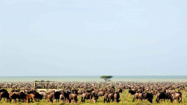 Een geweldige vakantie in Tanzania