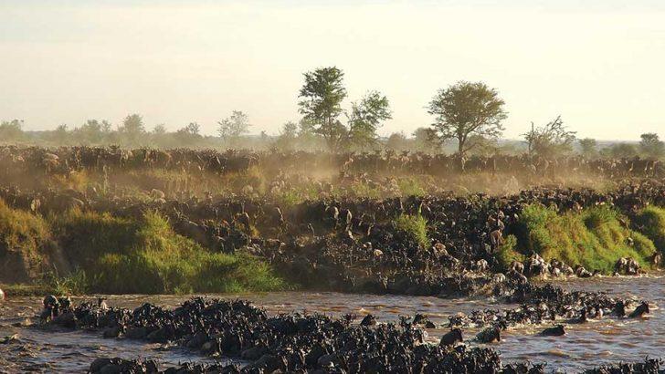 De beste tijd om de Serengeti te bezoeken