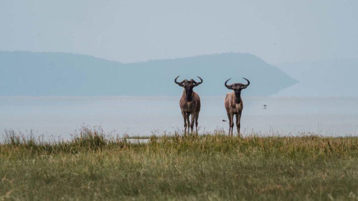 Onvergetelijke safari reis