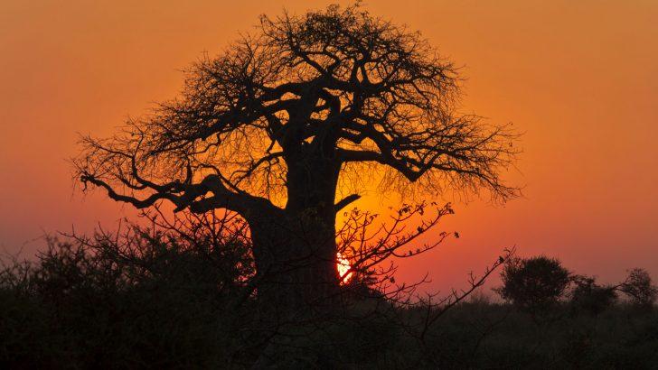 Onze reis in Tanzania