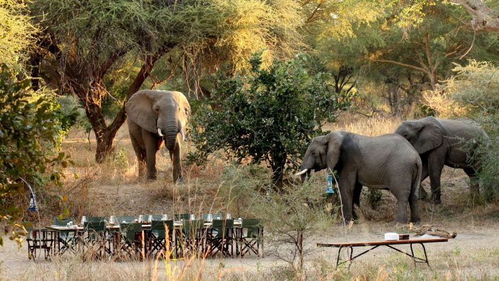 Explore Tanzania - Accommodatie Ruaha National Park - Mdonya Old River Camp