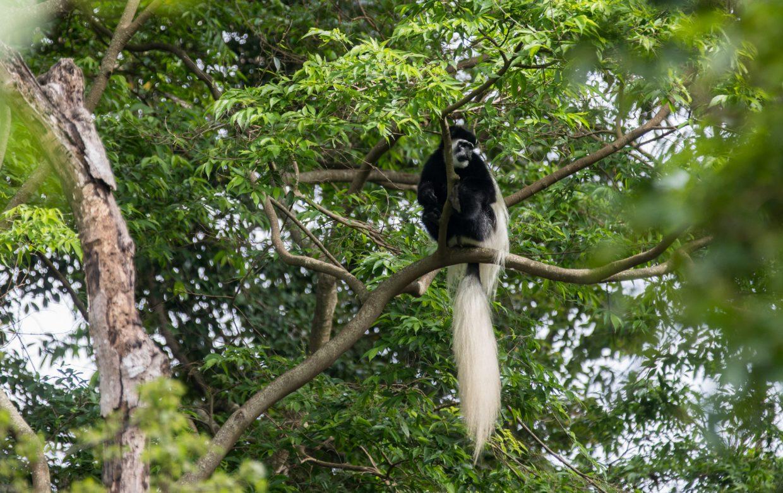 Explore Tanzania - Accommodatie Arusha - Arusha Villa