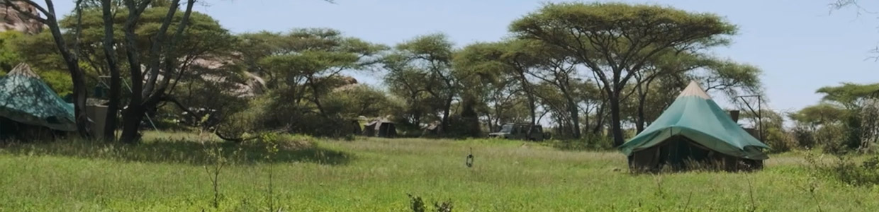 Green Camp Lake Manyara
