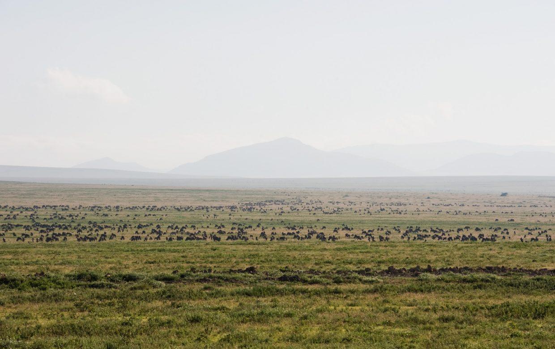 Explore Tanzania - Accommodatie Selous Game Reserve - SiwanduExplore Tanzania - Accommodatie Serengeti - Nomad Serengeti Safari Camp - Lake Masek Tented Lodge