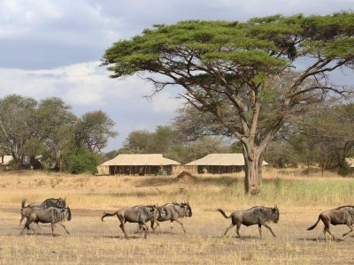 Explore Tanzania - Accommodatie Selous Game Reserve - SiwanduExplore Tanzania - Accommodatie Serengeti - Ubuntu Camp