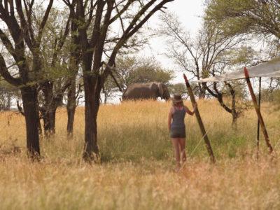 Serengeti Kimondo camp