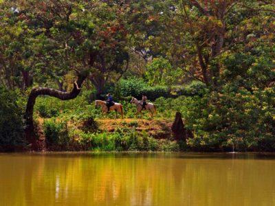 Makoa Farm west kilimanjaro