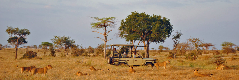 Gevarieerde safari en strand