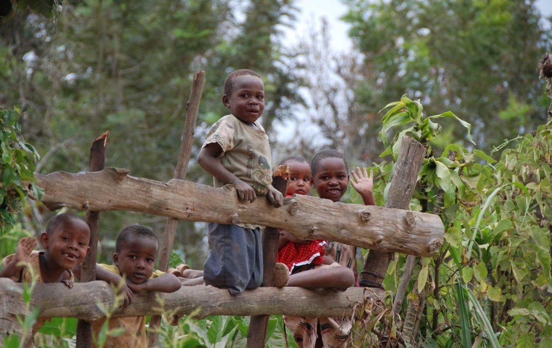 Usambara Mountains - Mambo View Point Eco Lodge