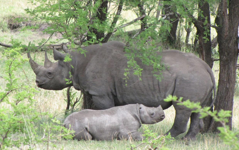 Baby Boom in de bush-bush