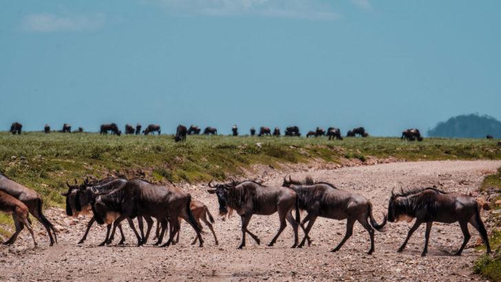 Reismeisje: Waarom ik in 2020 naar Tanzania wil reizen