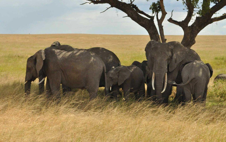 Herfstvakantie met de kinderen op safari