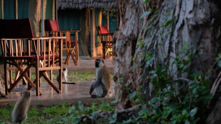 PCR test in Tanzania, locatie Zanzibar