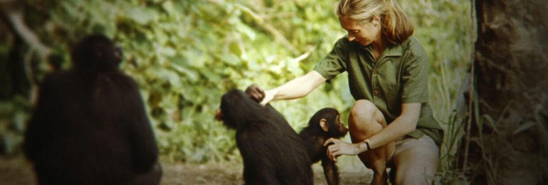 De voetsporen van Jane Goodall